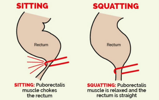 poo-positions-sitting-vs-squatting