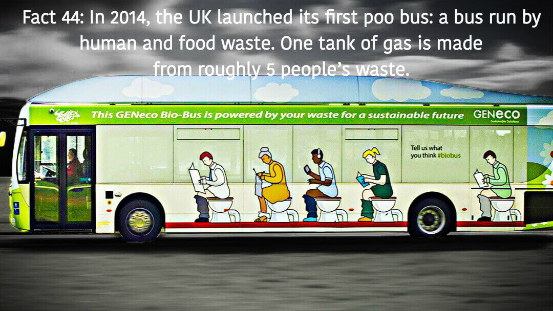 uk-poo-bus-fact44